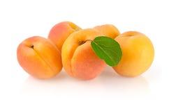 Mogna aprikors med bladet Royaltyfri Foto