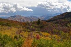 Mogna Autumn Meadow royaltyfri bild