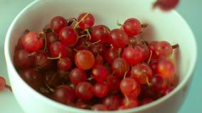 Mogna bärkrusbär faller i en vit bunke stock video