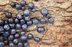 mogna blåbär Arkivbilder