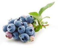 mogna blåbär Royaltyfri Fotografi
