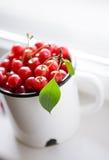 Mogna Cherry Royaltyfria Bilder