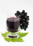Mogna druvor och vinisolat Arkivfoto