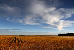 Mogna fält för sojaböna Royaltyfri Bild