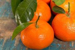 Mogna färgrika tropiska citrusfrukter, mandariner eller clementines c Royaltyfria Foton
