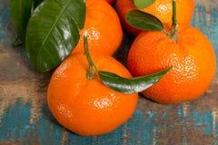 Mogna färgrika tropiska citrusfrukter, mandariner eller clementines c Royaltyfri Foto