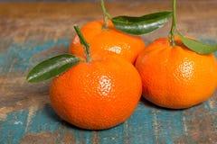 Mogna färgrika tropiska citrusfrukter, mandariner eller clementines c Arkivfoto