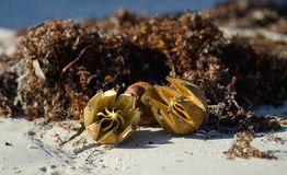 Mogna fruktmuttrar som ligger på en sandig strand Arkivbild