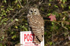 Mogna gallerförsedda Owl Obeying det inget jakttecknet royaltyfri bild