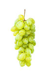 Mogna gröna druvor som hänger mot white Royaltyfria Foton