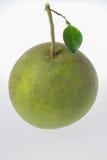 Mogna gröna pomelocitrusfrukter Royaltyfria Bilder