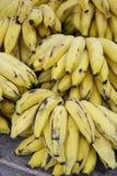 Mogna gula banangrupper på den brasilianska bondemarknaden Royaltyfria Bilder