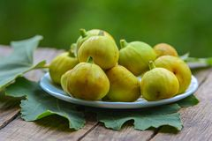 Mogna gula fikonträd Royaltyfria Bilder