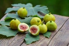 Mogna gula fikonträd Royaltyfri Bild