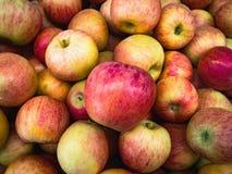Mogna härliga äpplen Arkivfoton