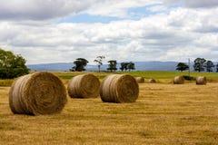 Mogna höstackar av vete, fält i den södra Australien royaltyfri bild