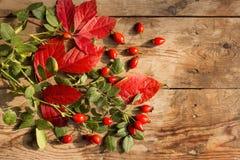 Mogna hund-ros frukter med röda och gröna sidor på en gammal trätabell arkivfoto