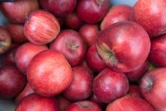 Mogna Jonathan äpplen -, rött, sött, medelstort royaltyfria bilder