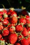 Mogna jordgubbar Arkivbild
