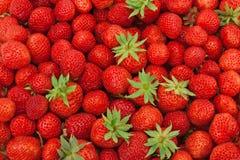 Mogna jordgubbar för bakgrund Arkivfoto