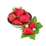 Mogna jordgubbar i grön bunke Arkivbilder