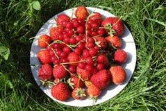 Mogna jordgubbar och röda vinbär på maträtten på gräset Royaltyfria Bilder