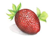 Mogna jordgubbar på en vit bakgrund stock illustrationer