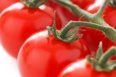 Mogna körsbärsröda tomater på vinrankan Royaltyfria Bilder