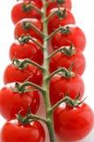 Mogna körsbärsröda tomater på vinrankan Arkivbilder