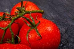 Mogna ljusa tomater på en filial på en svart bakgrund Royaltyfria Foton