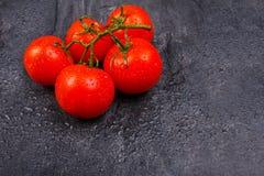 Mogna ljusa tomater på en filial på en svart bakgrund Arkivbild