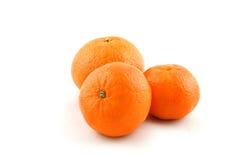 mogna mandarins Arkivfoto
