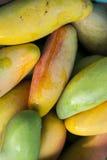 mogna mango Royaltyfria Bilder