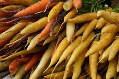 Mogna morötter och palsternackor Arkivfoton