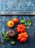 Mogna nya färgrika tomater Royaltyfri Fotografi