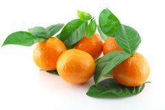 Mogna nya mandarines Arkivbild