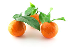 Mogna nya mandarines med gröna sidor Arkivfoto