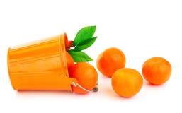 mogna nya mandarins Arkivfoton