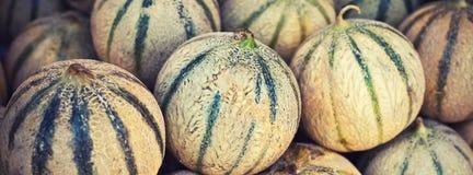 Mogna nya melon traver i en bondemarknad Arkivbilder