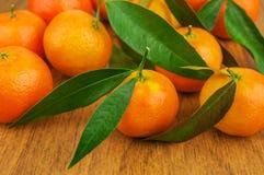 Mogna och nya mandarines Royaltyfri Bild