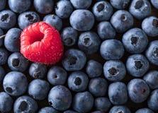 Mogna och saftiga nya blåbär och hallon Arkivfoto