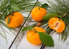 Mogna orange clementinetangerin med gräsplansidor och conifero Royaltyfri Fotografi