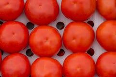 Mogna organiska tomater i den ventilerade brunnen -, öppna kartonger Royaltyfri Bild