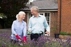 Mogna par som tillsammans arbetar i trädgård royaltyfria bilder