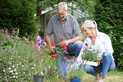 Mogna par som ut planterar växter i trädgård Arkivbild