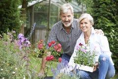 Mogna par som ut planterar växter i trädgård Royaltyfri Foto