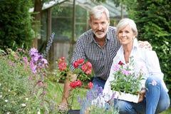 Mogna par som ut planterar växter i trädgård Arkivfoto