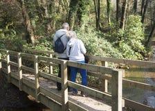 Mogna paranseendet på en bro på ett skogsmarkområde Royaltyfria Foton