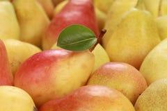 Mogna Pears Arkivbild