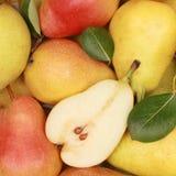 Mogna pears Royaltyfri Fotografi